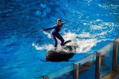 Το ΣΑΝ ΝΤΙΈΓΚΟ, ΗΠΑ - 15 ΝΟΕΜΒΡΊΟΥ, 2015 - το δελφίνι παρουσιάζει εν πλω κόσμο Στοκ φωτογραφία με δικαίωμα ελεύθερης χρήσης