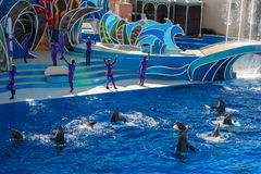 Το ΣΑΝ ΝΤΙΈΓΚΟ, ΗΠΑ - 15 ΝΟΕΜΒΡΊΟΥ, 2015 - το δελφίνι παρουσιάζει εν πλω κόσμο Στοκ Φωτογραφία