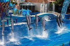 Το ΣΑΝ ΝΤΙΈΓΚΟ, ΗΠΑ - 15 ΝΟΕΜΒΡΊΟΥ, 2015 - το δελφίνι παρουσιάζει εν πλω κόσμο Στοκ εικόνες με δικαίωμα ελεύθερης χρήσης