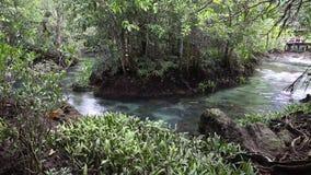 Το σαφές πράσινο ρεύμα διατρέχει της δασικής ρίζας μαγγροβίων Στη μέση της σκιερής και όμορφης φύσης κλείστε επάνω απόθεμα βίντεο