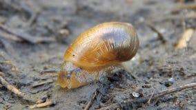 Το σαλιγκάρι σέρνεται στο έδαφος φιλμ μικρού μήκους