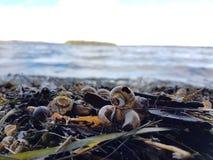 Το σαλιγκάρι Στοκ φωτογραφίες με δικαίωμα ελεύθερης χρήσης