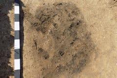 Το σημείο Archaelogical στον επίγειο χαρακτηρισμό μερικοί ύπαρξης βρίσκει τον τάφο ή κάτι παρόμοιος Πραγματικές ανασκαφές, digger στοκ εικόνες