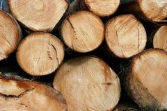 το σιτάρι καταγράφει το δάσος ξυλείας Στοκ Φωτογραφίες