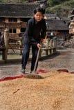 Το σιτάρι που διασκορπίστηκε στο ύφασμα που ξεραίνει, κινεζική γυναίκα ισοπέδωσε δικοί του στοκ φωτογραφία