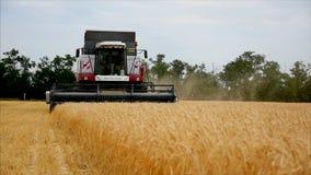 Το σιτάρι σίτου σε γεωργικά μηχανήματα υποβάθρου συνδυάζει τη θεριστι φιλμ μικρού μήκους