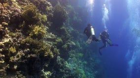 Το σκάφανδρο που βουτά κοντά στο σχολείο των ψαριών στην κοραλλιογενή ύφαλο χαλαρώνει την υποβρύχια Ερυθρά Θάλασσα φιλμ μικρού μήκους
