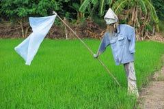 Το σκιάχτρο στον τομέα ρυζιού, αποτρέπει το πουλί τρώει τους σπόρους ρυζιού Στοκ εικόνα με δικαίωμα ελεύθερης χρήσης