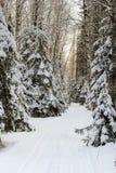 Το σκι μεταξύ των έλατων Στοκ Φωτογραφία