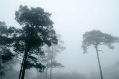 Το σκοτεινό δάσος δέντρων πεύκων στοκ φωτογραφία