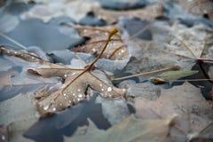 Το σκοτεινό φθινόπωρο βγάζει φύλλα Στοκ Φωτογραφίες