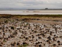 Το σκουλήκι πετά στην παραλία του Devon στοκ εικόνες