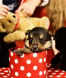 Το σκυλάκι κοιτάζει από το επισημασμένο κιβώτιο Χριστουγέννων επάνω το υπόβαθρο στοκ εικόνα