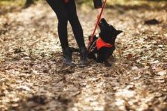 Το σκυλί έχει τη διασκέδαση με τον ιδιοκτήτη της στο πάρκο φθινοπώρου στοκ εικόνα με δικαίωμα ελεύθερης χρήσης