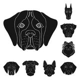 Το σκυλί αναπαράγει τα μαύρα εικονίδια στην καθορισμένη συλλογή για το σχέδιο Ρύγχος μιας διανυσματικής απεικόνισης Ιστού αποθεμά Στοκ Εικόνες