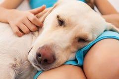 Το σκυλί απολαμβάνει την επιχείρηση του ανθρώπινου φίλου της Στοκ Εικόνες