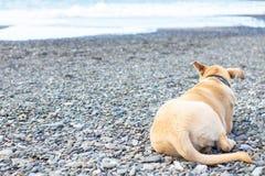 Το σκυλί βρίσκεται πίσω στην παραλία πετρών στοκ εικόνα με δικαίωμα ελεύθερης χρήσης