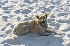 Το σκυλί βρίσκεται στην καθαρή άσπρη άμμο Στοκ εικόνα με δικαίωμα ελεύθερης χρήσης