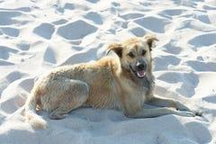 Το σκυλί βρίσκεται στην καθαρή άσπρη άμμο Στοκ Εικόνες