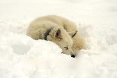 το σκυλί γεροδεμένο εμ&phi Στοκ εικόνα με δικαίωμα ελεύθερης χρήσης