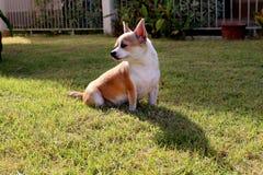 Το σκυλί γλιστρά το πρωί στοκ εικόνα με δικαίωμα ελεύθερης χρήσης