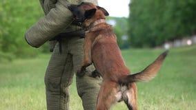 Το σκυλί δαγκώνει σε σε αργή κίνηση απόθεμα βίντεο
