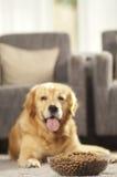 Το σκυλί δεν μπορεί να περιμένει να φάει τα τρόφιμά του Στοκ εικόνες με δικαίωμα ελεύθερης χρήσης