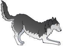 Το σκυλί είναι γκρίζο γεροδεμένος Σιβηριανός σκυλί εύθυμο Αστειολόγοι η ουρά του διανυσματική απεικόνιση