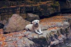 Το σκυλί κάθεται Στοκ εικόνες με δικαίωμα ελεύθερης χρήσης