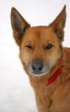 το σκυλί κλείνει το μάτι Στοκ Εικόνες