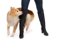 το σκυλί μαθαίνει τα τεχνάσματα στοκ εικόνα με δικαίωμα ελεύθερης χρήσης