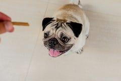 Το σκυλί μαλαγμένου πηλού στέκεται στοκ εικόνα
