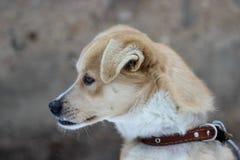 Το σκυλί με το λανθασμένο δάγκωμα κάθεται στο κρύο στοκ εικόνα
