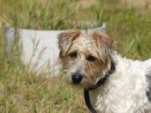 Το σκυλί μου επιδιώκει για ένα παιχνίδι Στοκ Φωτογραφίες