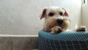 Το σκυλί ομορφιάς μου Στοκ Φωτογραφίες