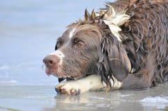το σκυλί παίζει το ύδωρ Στοκ φωτογραφία με δικαίωμα ελεύθερης χρήσης