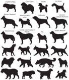 Το σκυλί παρουσιάζει σκιαγραφίες Απεικόνιση αποθεμάτων