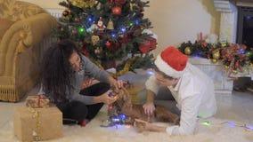Το σκυλί πιάνει μια ζωηρόχρωμη ηλεκτρική γιρλάντα με τα σαγόνια απόθεμα βίντεο