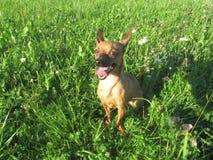 Το σκυλί σκεπτόμενο κάτι στοκ φωτογραφία με δικαίωμα ελεύθερης χρήσης