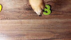 Το σκυλί συλλέγει τον αριθμό το 2018 επάνω από την όψη νέο έτος έννοιας φιλμ μικρού μήκους