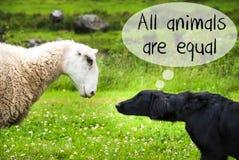 Το σκυλί συναντά τα πρόβατα, το κείμενο όλα τα ζώα είναι ίσο Στοκ Φωτογραφίες