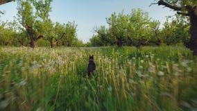 Το σκυλί τρέχει γρήγορα μακρυά από τη κάμερα απόθεμα βίντεο
