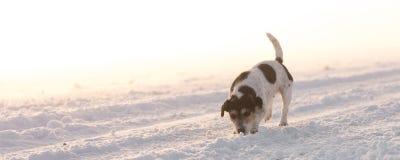Το σκυλί τρέχει σε μια ομιχλώδη οδό στοκ εικόνες