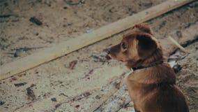 Το σκυλί φαίνεται λυπημένη αναμονή για τον κύριο απόθεμα βίντεο
