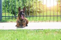 Το σκυλί φυλάκων εναπόκειται σιωπηλά ευρέως ανοιγμένα σαγόνια Στοκ εικόνες με δικαίωμα ελεύθερης χρήσης