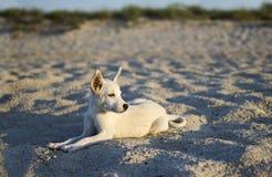 Το σκυλί Στοκ φωτογραφίες με δικαίωμα ελεύθερης χρήσης