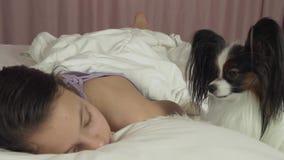 Το σκυλί Papillon ξυπνά το κορίτσι εφήβων στο βίντεο μήκους σε πόδηα αποθεμάτων κρεβατιών φιλμ μικρού μήκους