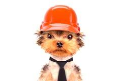 Το σκυλί έντυσε ως οικοδόμος Στοκ Φωτογραφία