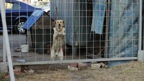 Το σκυλί αποφλοιώνει πίσω από έναν φράκτη φιλμ μικρού μήκους