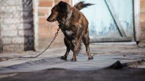 Το σκυλί αποφλοιώνει υπαίθριο φιλμ μικρού μήκους